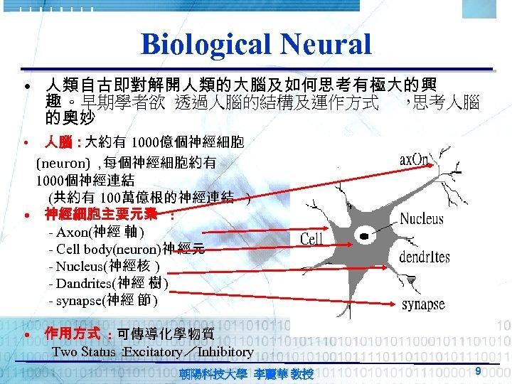 Biological Neural • 人類自古即對解開人類的大腦及如何思考有極大的興 趣 。早期學者欲 透過人腦的結構及運作方式 , 思考人腦 的奧妙 人腦: 大約有 1000億個神經細胞 (neuron),