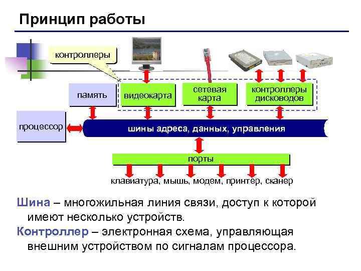 Принцип работы контроллеры память процессор видеокарта сетевая карта контроллеры дисководов шины адреса, данных, управления