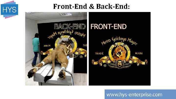 Front-End & Back-End: