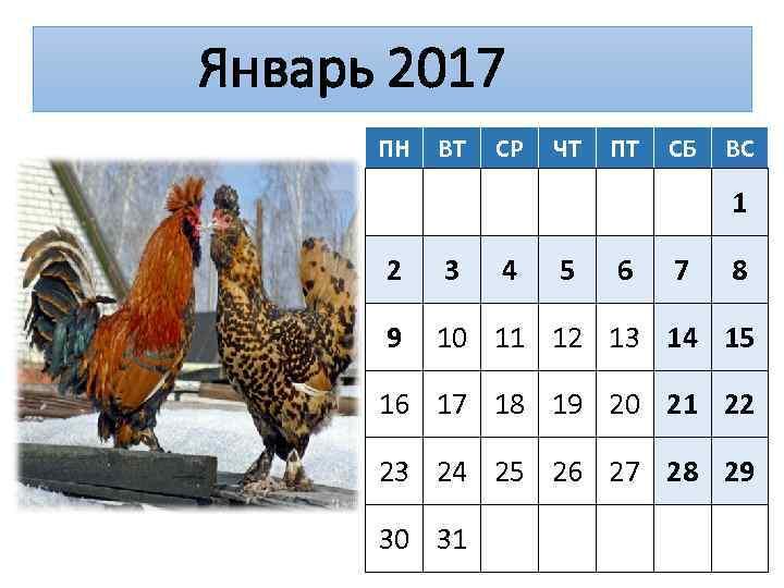 Январь 2017 ПН ВТ СР ЧТ ПТ СБ ВС 1 2 3 4 5