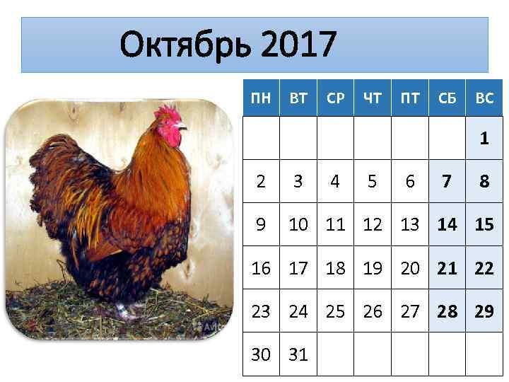 Октябрь 2017 ПН ВТ СР ЧТ ПТ СБ ВС 1 2 3 4 5