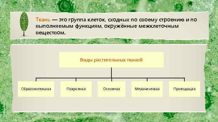 Ткань — это группа клеток, сходных по своему строению и по выполняемым функциям, окружённые