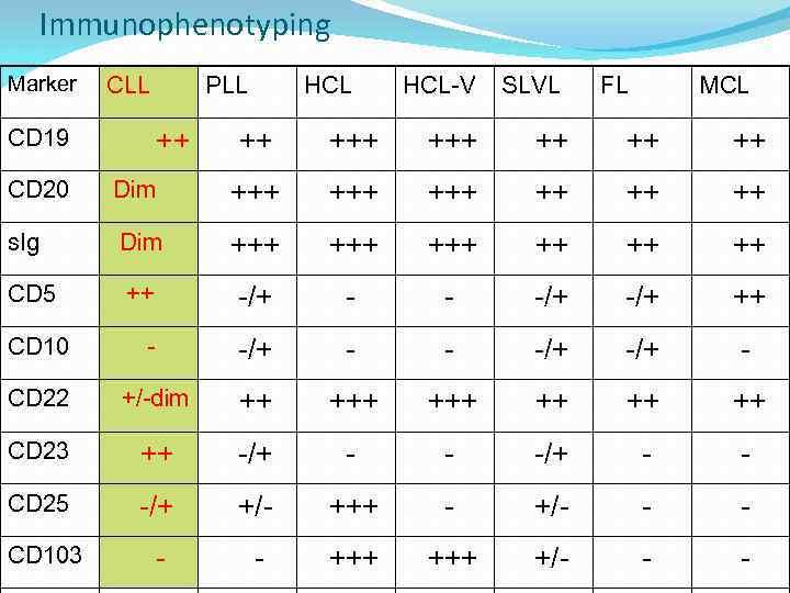 Immunophenotyping Marker CLL CD 19 PLL ++ HCL-V SLVL FL MCL ++ +++ ++