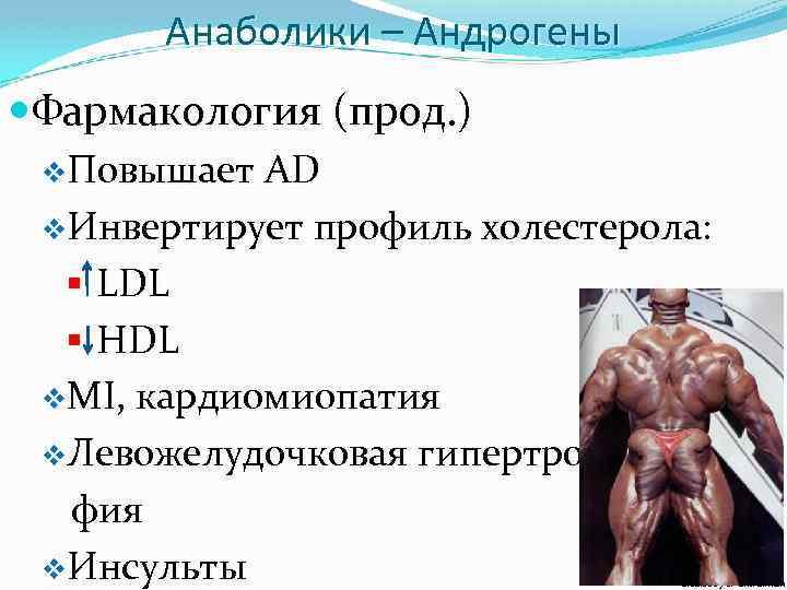 Анаболики – Андрогены Фармакология (прод. ) v. Повышает AD v. Инвертирует профиль холестерола: §
