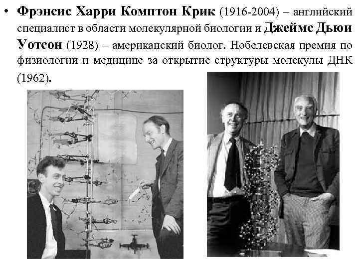 • Фрэнсис Харри Комптон Крик (1916 -2004) – английский специалист в области молекулярной