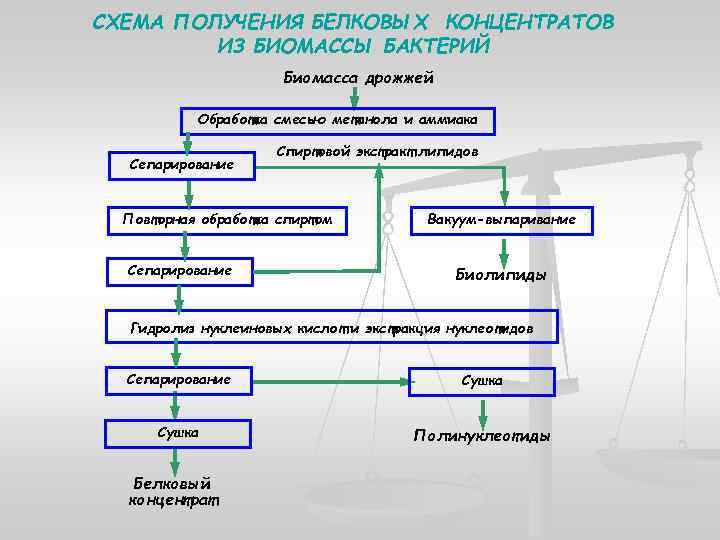 СХЕМА ПОЛУЧЕНИЯ БЕЛКОВЫХ КОНЦЕНТРАТОВ ИЗ БИОМАССЫ БАКТЕРИЙ Биомасса дрожжей Обработка смесью метанола и аммиака