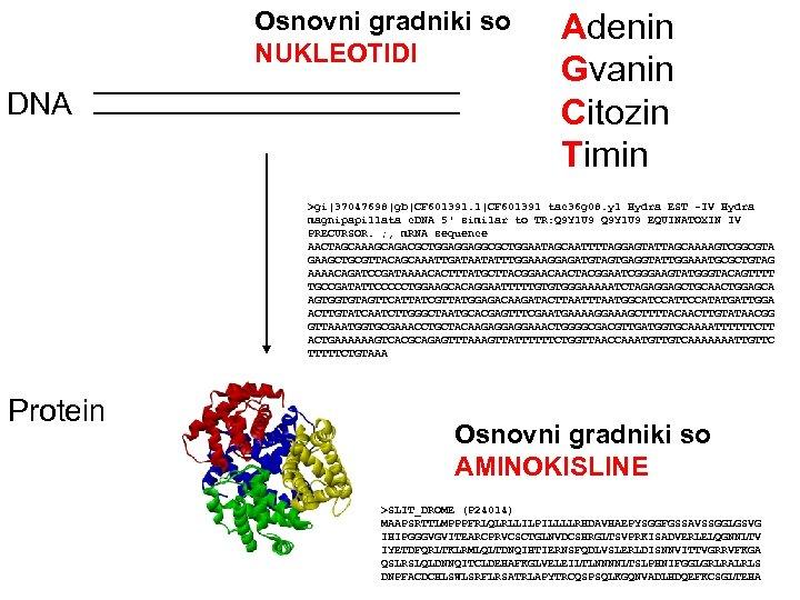 Osnovni gradniki so NUKLEOTIDI DNA Adenin Gvanin Citozin Timin >gi 37047698 gb CF 601391. 1 CF 601391 tac