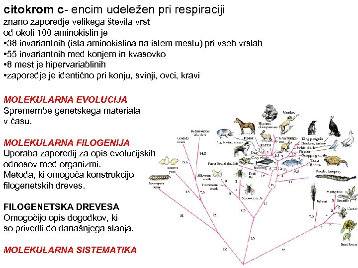 citokrom c- encim udeležen pri respiraciji znano zaporedje velikega števila vrst od okoli 100