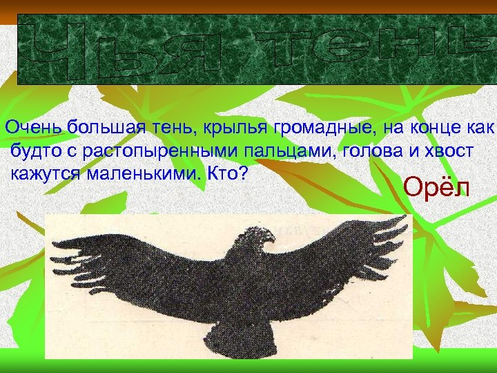 Очень большая тень, крылья громадные, на конце как будто с растопыренными пальцами, голова и