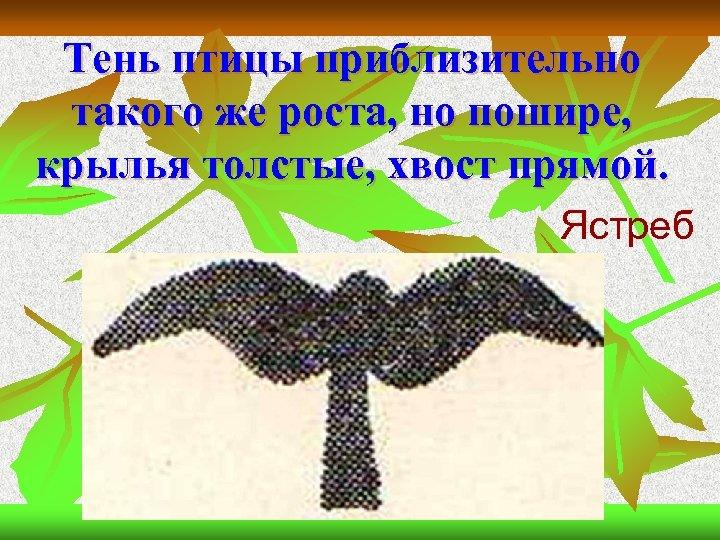 Тень птицы приблизительно такого же роста, но пошире, крылья толстые, хвост прямой. Ястреб