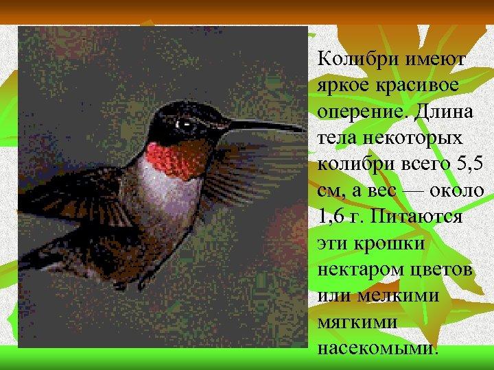 n Колибри имеют яркое красивое оперение. Длина тела некоторых колибри всего 5, 5 см,