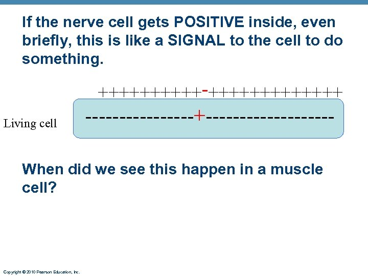 If the nerve cell gets POSITIVE inside, even briefly, this is like a SIGNAL