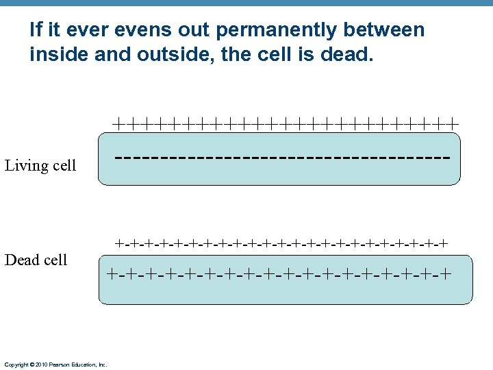 If it ever evens out permanently between inside and outside, the cell is dead.