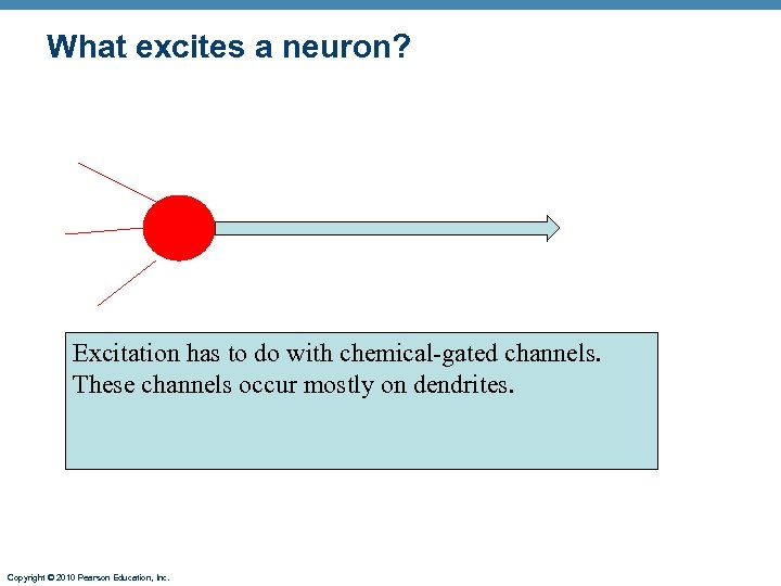 What excites a neuron? Excitation has to do with chemical-gated channels. These channels occur