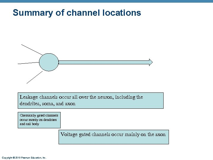 Summary of channel locations Leakage channels occur all over the neuron, including the dendrites,