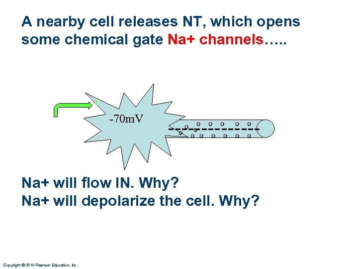 A nearby cell releases NT, which opens some chemical gate Na+ channels…. . -70