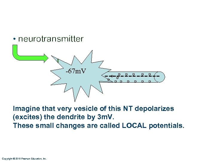 • neurotransmitter -67 m. V ------- Imagine that very vesicle of this NT