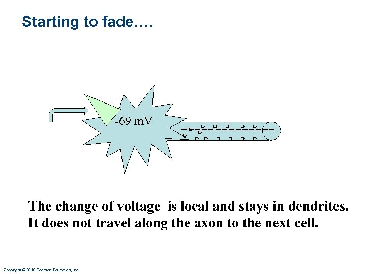 Starting to fade…. -69 m. V ------- The change of voltage is local and