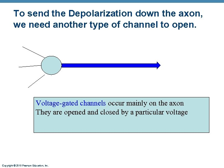 To send the Depolarization down the axon, we need another type of channel to