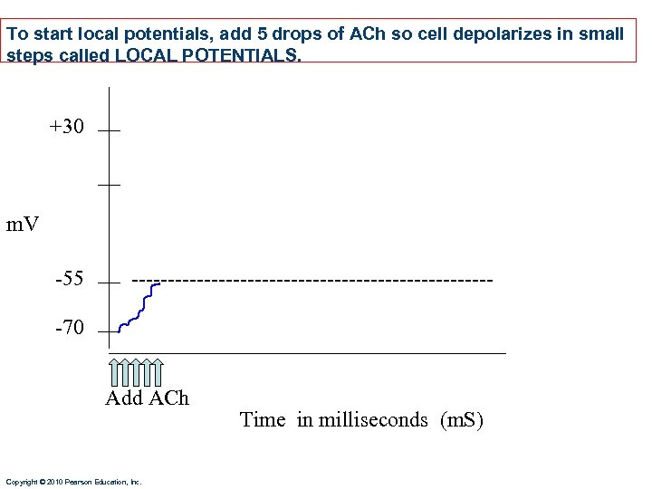 To start local potentials, add 5 drops of ACh so cell depolarizes in small