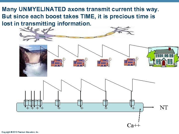 Many UNMYELINATED axons transmit current this way. But since each boost takes TIME, it