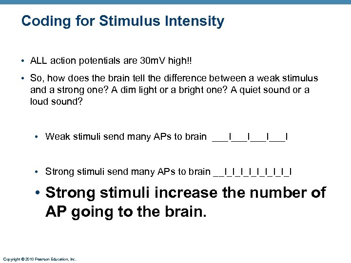 Coding for Stimulus Intensity • ALL action potentials are 30 m. V high!! •