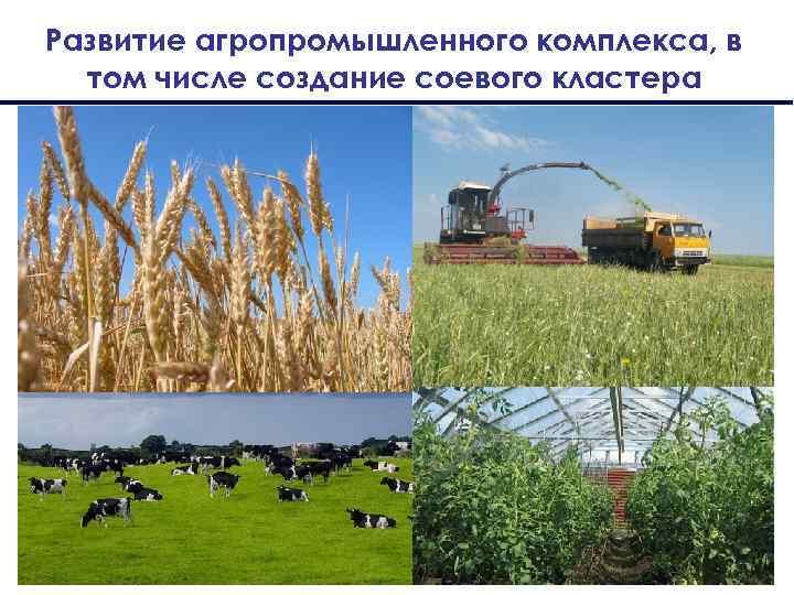 Развитие агропромышленного комплекса, в том числе создание соевого кластера