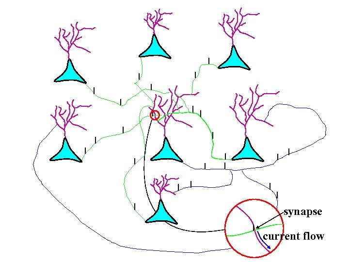 synapse current flow