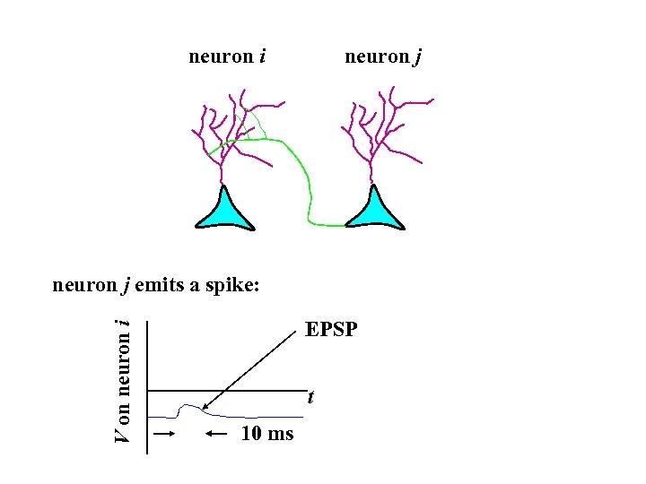 neuron i neuron j V on neuron i neuron j emits a spike: EPSP