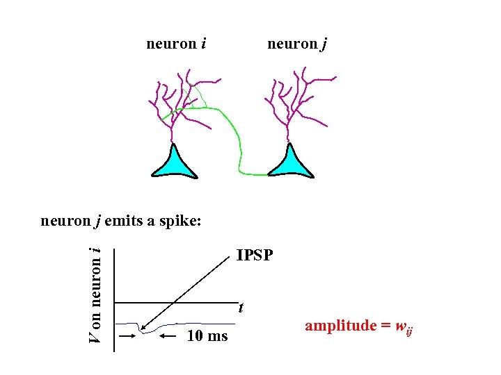 neuron i neuron j V on neuron i neuron j emits a spike: IPSP