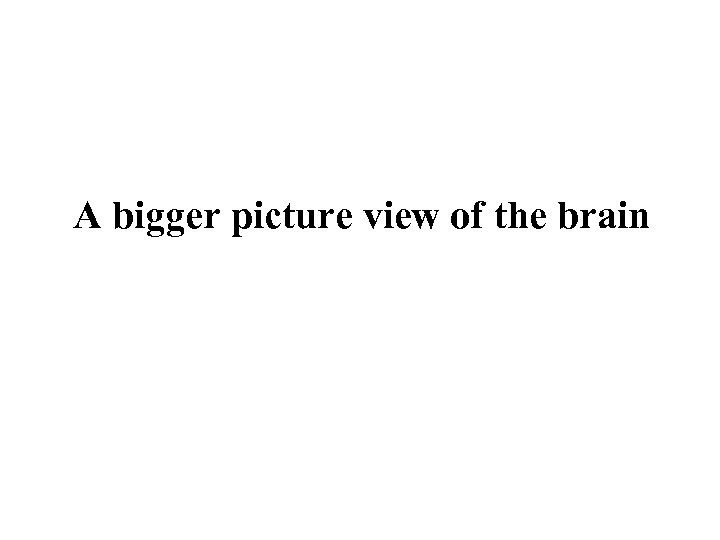 A bigger picture view of the brain