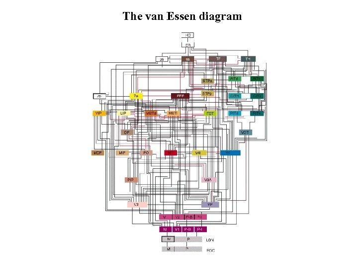The van Essen diagram