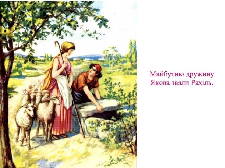 Майбутню дружину Якова звали Рахіль.