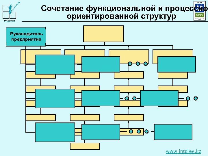 Сочетание функциональной и процессно ориентированной структур Руководитель предприятия www. intalev. kz