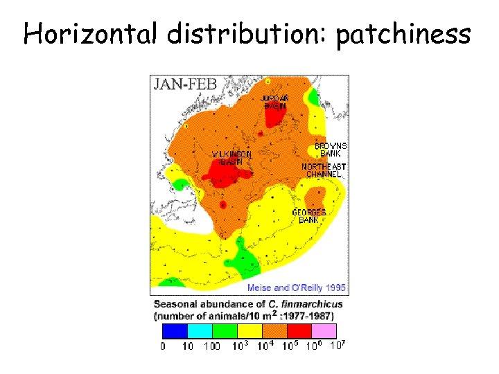 Horizontal distribution: patchiness