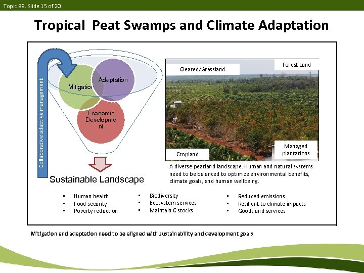 Topic B 3. Slide 15 of 20 Tropical Peat Swamps and Climate Adaptation Forest
