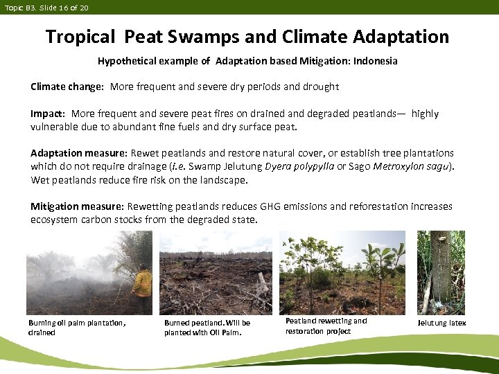 Topic B 3. Slide 16 of 20 Tropical Peat Swamps and Climate Adaptation Hypothetical