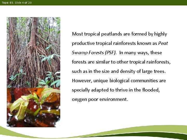 Topic B 3. Slide 4 of 20 Most tropical peatlands are formed by highly