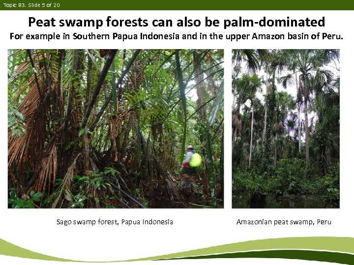 Topic B 3. Slide 5 of 20 Peat swamp forests can also be palm-dominated