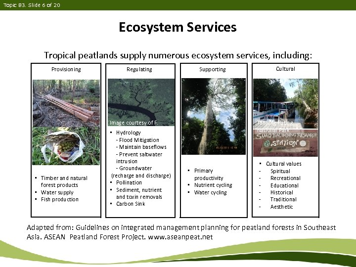 Topic B 3. Slide 6 of 20 Ecosystem Services Tropical peatlands supply numerous ecosystem