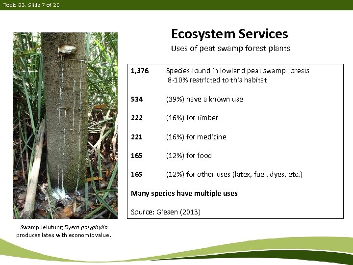 Topic B 3. Slide 7 of 20 Ecosystem Services Uses of peat swamp forest
