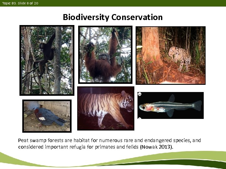 Topic B 3. Slide 8 of 20 Biodiversity Conservation Peat swamp forests are habitat