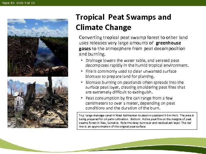 Topic B 3. Slide 9 of 20 Tropical Peat Swamps and Climate Change Converting