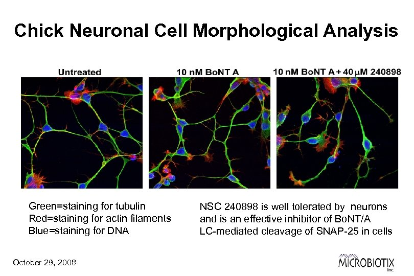 Chick Neuronal Cell Morphological Analysis Green=staining for tubulin Red=staining for actin filaments Blue=staining for