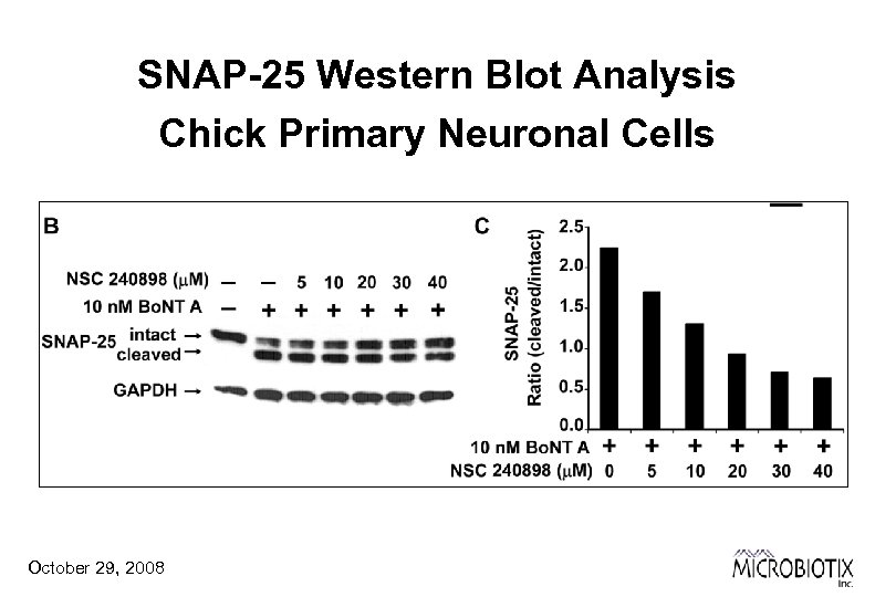 SNAP-25 Western Blot Analysis Chick Primary Neuronal Cells October 29, 2008