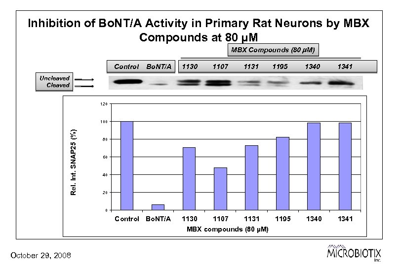 Inhibition of Bo. NT/A Activity in Primary Rat Neurons by MBX Compounds at 80