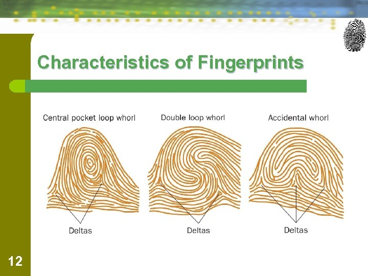 Characteristics of Fingerprints 12