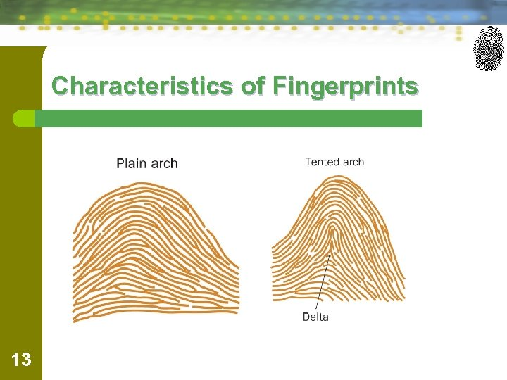 Characteristics of Fingerprints 13