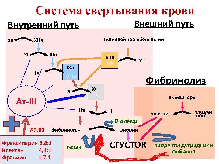 Система свертывания крови Внешний путь Внутренний путь Тканевой тромбопластин XIIa XII XI XIa VIIa
