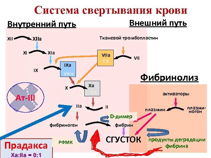 Система свертывания крови Внешний путь Внутренний путь Тканевой тромбопластин XIIa XII XI XIa IX